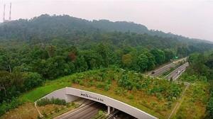Kamu Tahu Nggak, Ada Jembatan Khusus Hewan di Singapura