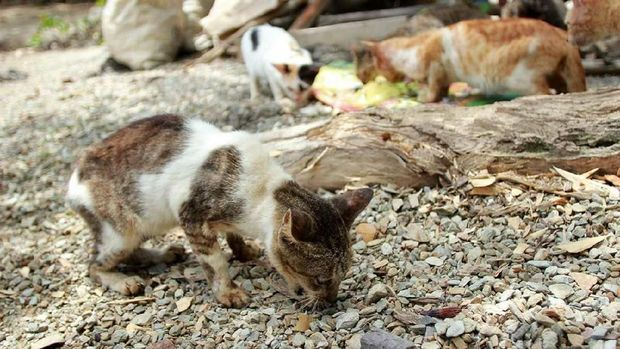 Kucing-Kucing di Pulau Kucing, Kepulauan Sula