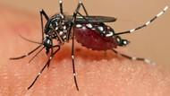 Nyamuk Mandul untuk Hentikan Demam Berdarah
