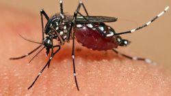 Catat, Tempat-Tempat Ini Paling Disukai Nyamuk untuk Ngumpet