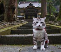 Kucing.