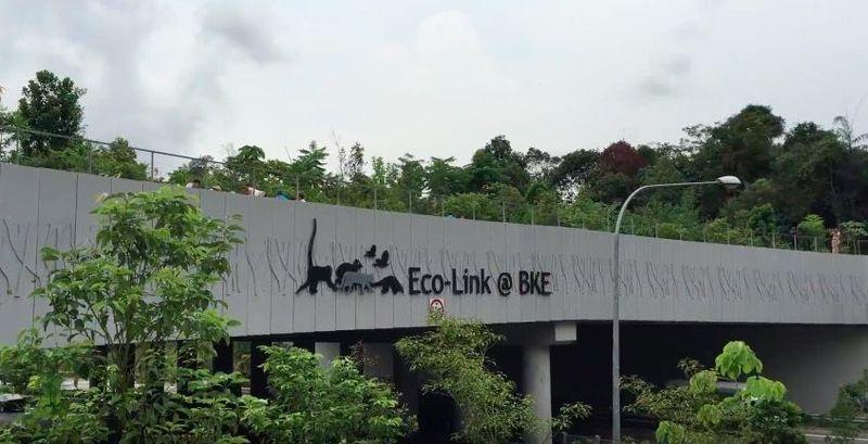 Jembatan ini memang dikhususkan untuk para hewan. Karena, dua taman yang dihubungkan tersebut berada membelah jalan tol (National Parks Singapore/Youtube)