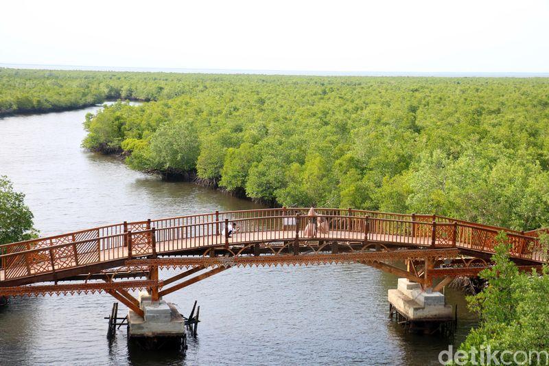 Wisata hutan mangrove ini terletak di Kuala Langsa, Kecamatan Langsa Barat, Kota Langsa, Aceh (Agus Setyadi/detikTravel)