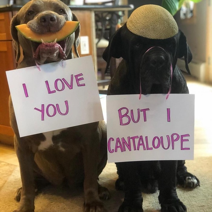 Akrab disapa Barn dan Maddy, dua anjing ini punya banyak penggemar di Instagram. Lihat aksi Barb saat merayu Maddie menggunakan cantaloupe. Gemas ya? Foto: Instagram barnabas.and.madeline.the.neos