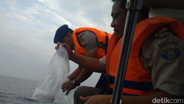 Setelah Diselamatkan, 34.208 Baby Lobster Dilepasliarkan