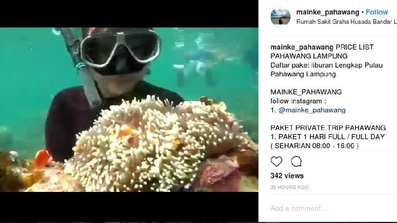 Wisatawan angkat karang (mainke_pahawang/Instagram)
