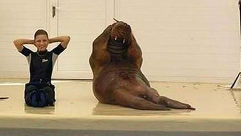 Foto: Begini Penampakan Lucunya Hewan-hewan Kalau Lagi Asyik Olahraga