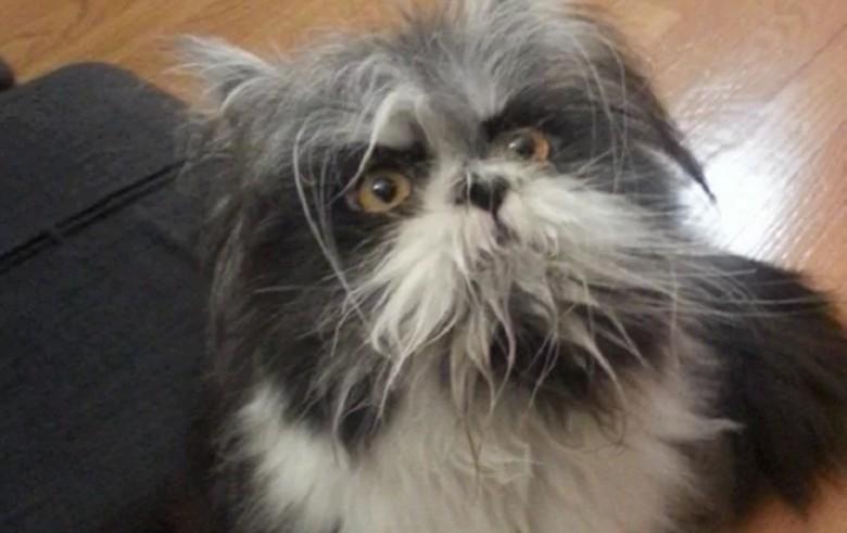 Ini anjing atau kucing? (Foto: Internet)