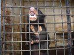Halau Beruang Madu Masuk Kampung, Warga Sumsel Pasang Perangkap