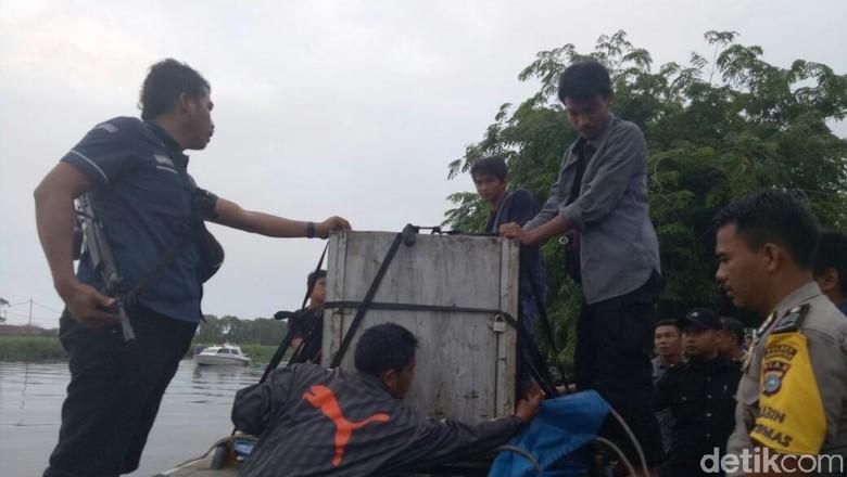 Bonita akan Dititipkan di Pusat Rehabilitasi Harimau Sumbar