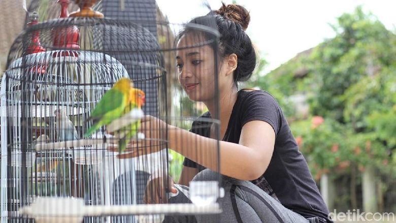 Gadis Manis Dari Magelang Ini Berprofesi Juri Lomba Burung