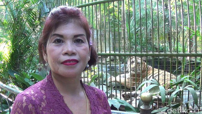 Inilah Ida Ayu Putu Diyatmini, sudah 15 tahun bekerja di Bali Zoo Singapadu, Gianyar (Nandhang Astika/detikTravel)