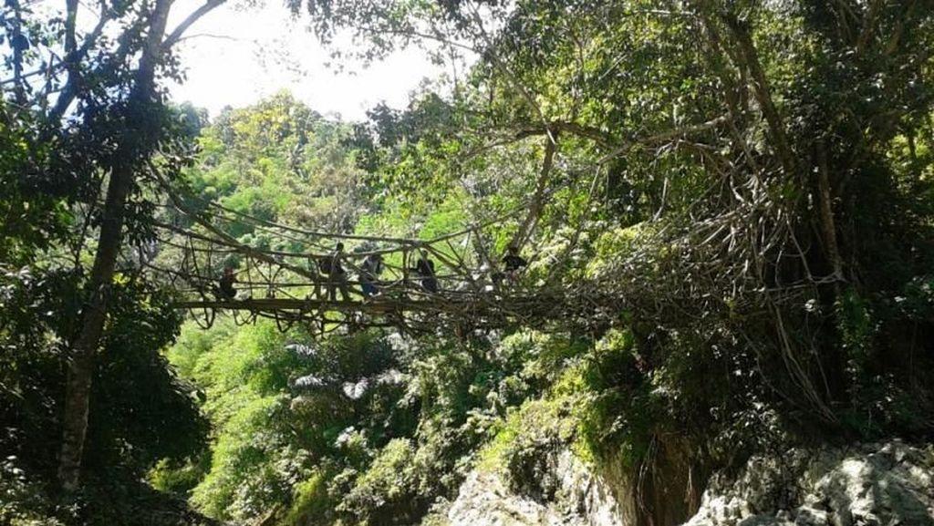 Petani Jahe Baduy Panen Dapat Pendapatan hingga Rp 60 Juta
