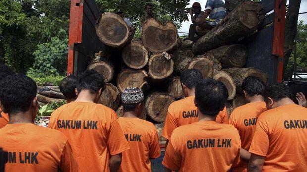 Ilustrasi pelaku illegal logging.