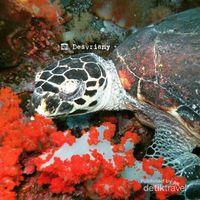 Laut Pulau Komodo juga jadi habitat penyu (Desvriany/d'Traveler)