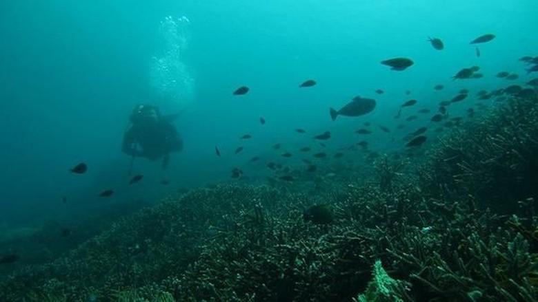 Bawah laut Pulau Komodo (Wayan Pai/dTraveler)