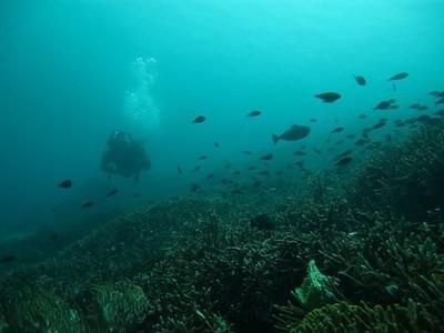 Bantahan Pada Media Inggris Soal Bawah Laut Pulau Komodo