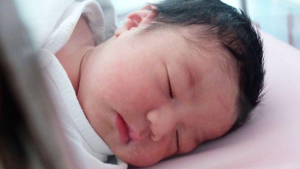 Lembar Putih Trinycta, Bayi Pipi Gembilnya Nycta Gina
