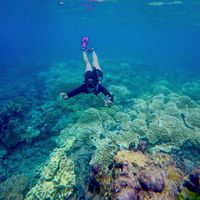 Melinda free diving di Raja Ampat