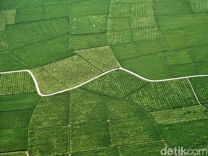 Lahan persawahan di Indonesia terus mengalami penyusutan. Setiap tahunnya sebanyak 150 ribu hingga 200 ribu hektar lahan sawah berubah menjadi lahan non sawah.