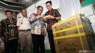 25.940 Butir Telur Tetas Ayam Diekspor ke Myanmar