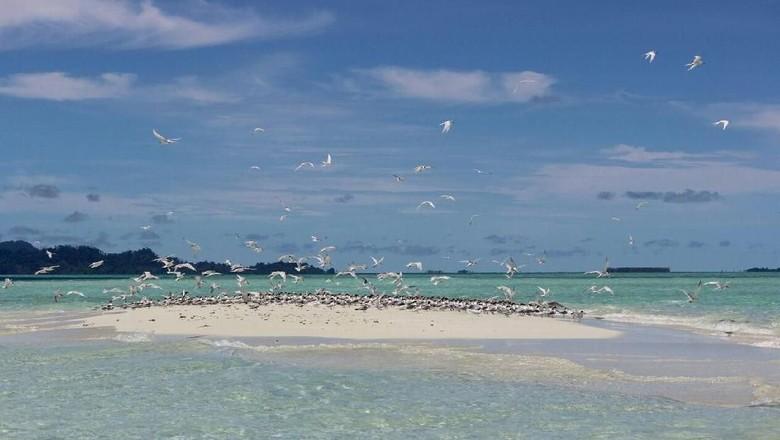 Baby Island, Aceh (dok Novri)