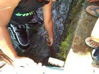 Sanca 3 Meter Ngumpet di Selokan Hebohkan Warga Garut