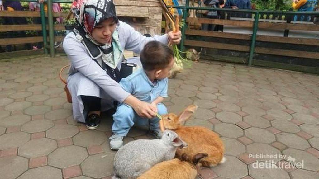Bermain dengan Hewan Imut di Farmhouse