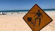 Sedang Berenang, Remaja 17 Tahun Tewas Tersengat Ubur-ubur