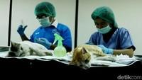 Kegiatan ini sebagai tindak lanjut dari program DKI Jakarta bebas rabies pada 2030. Pengebirian kucing ini akan dilakukan rutin 2 kali setiap tahun.