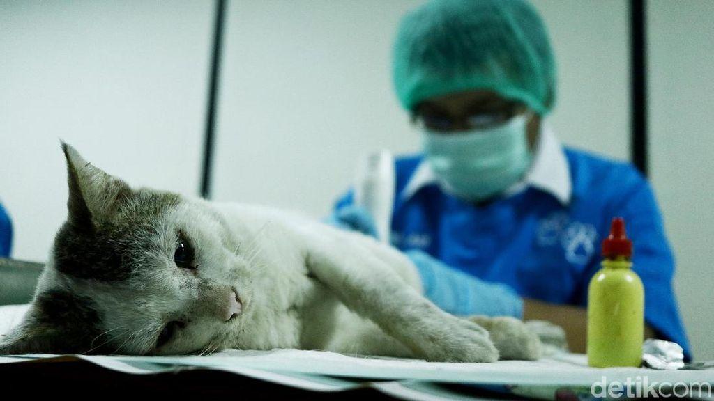 Cegah Pandemi, Kemenkes RI Prioritaskan 3 Penyakit Ini