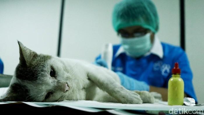 Antisipasi rabies antara lain dilakukan dengan kastrasi atau kebiri terhadap kucing liar (Foto: Rifkianto Nugroho)