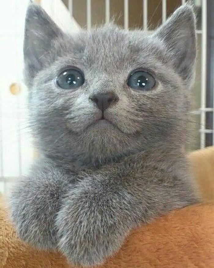 Coba lihat tampang imutnya kucing ini. (Foto: Instagram)