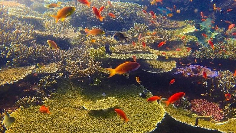 Bawah laut Pulau Komodo terkini (dok Istimewa/Taman Nasional Komodo/Genpi/Kemenpar)