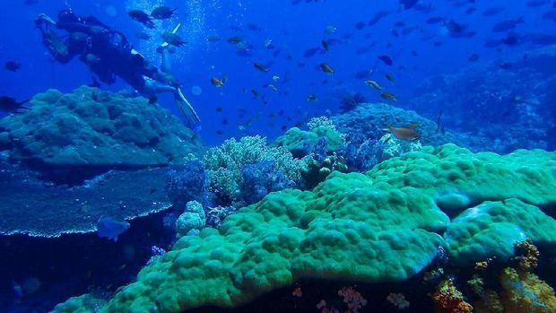 Bawah Laut Pulau Komodo tidak mengalami kerusakan
