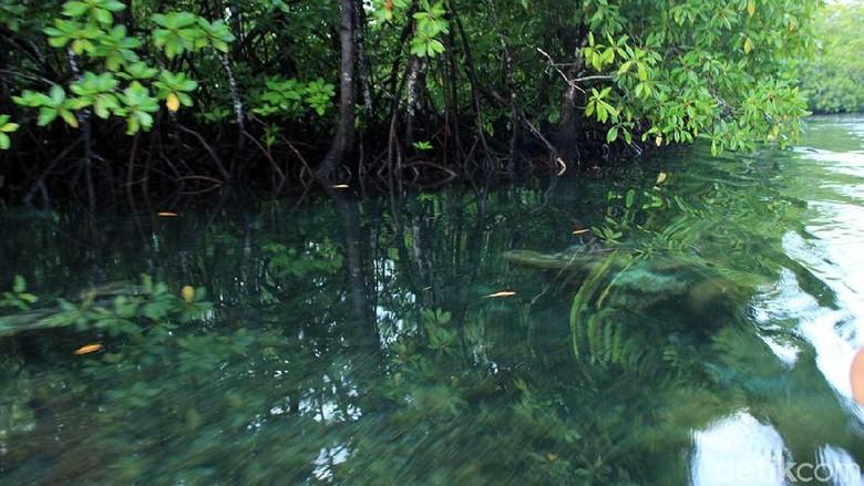 Telaga Kum di Pulau Mangoli, Kepulauan Sula (Randy/detikTravel)