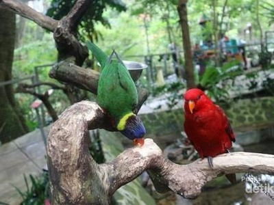 Ke Bandung, Jangan Lewatkan Bird and Bromelia Pavilion Ya!