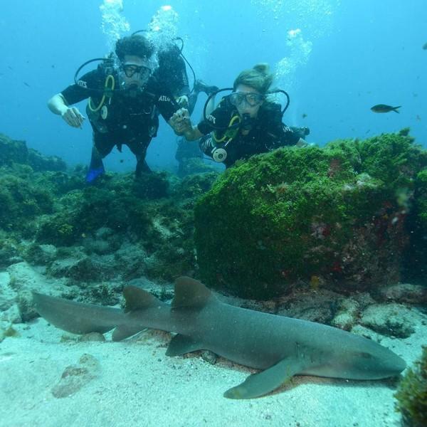 Kalau yang ini Kaka sedang menyelam. Nampak istri di sampingnya menemani dan melihat seekor hiu di dasar laut itu (Kaka/Instagram)