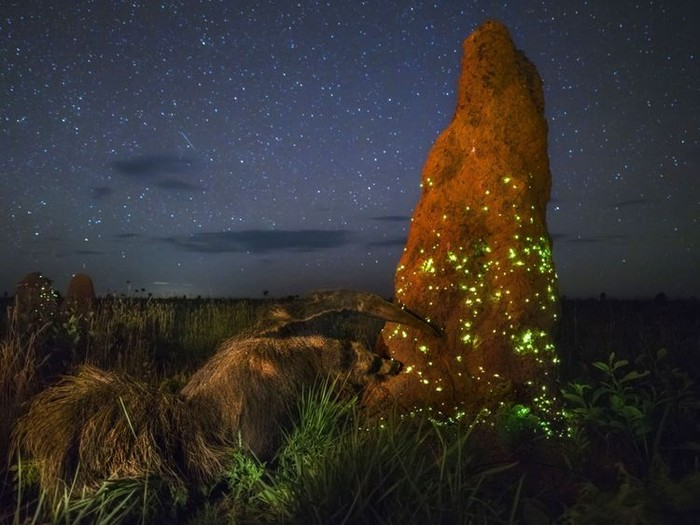 Foto milik Mario Cabral yang didiskualifikasi. Foto: Wildlife Fotografer of the Year