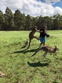 Traveler diserang kanguru (Shane Lewis/Kroosn Shuttle Service/facebook)