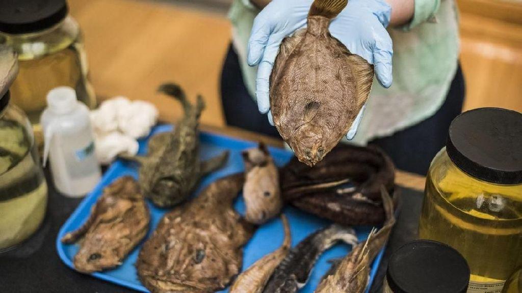 Seperti Ini Museum Ikan Terbesar di Dunia
