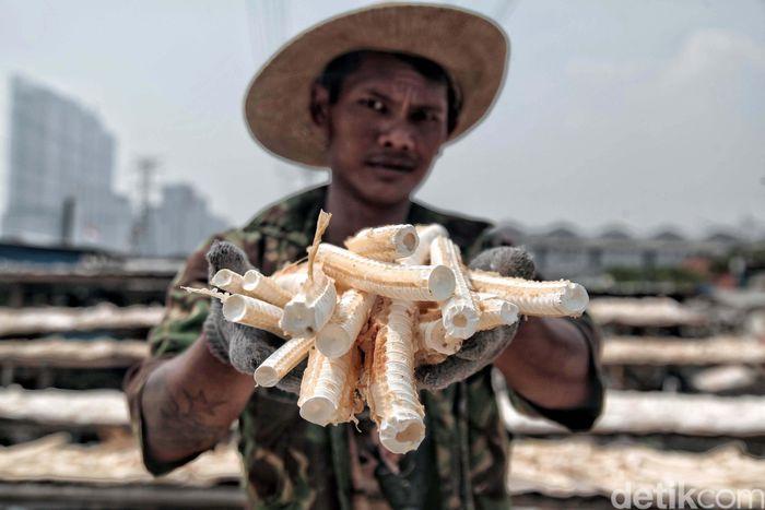 Seorang nelayan menunjukan tulang ikan cucut yang tengah dijemur, Jumat (4/5).