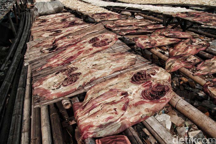 Pengolahan Kulit ikan pari menjadi bahan makanan maupun dompet dan tas sedang menjadi tren baru.