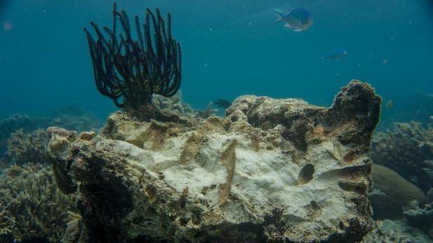 Hawaii Melarang Tabir Surya yang Merusak Terumbu Karang