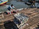RI Impor Ikan Makarel, Ini Negara Asalnya