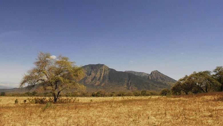 Savana di Taman Nasional Baluran (Baluran National Park)