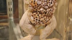 Ingin tahu dirimu punya trypophobia atau tidak? Coba saja buktikan dengan melihat beberapa foto langka hewan-hewan ini.
