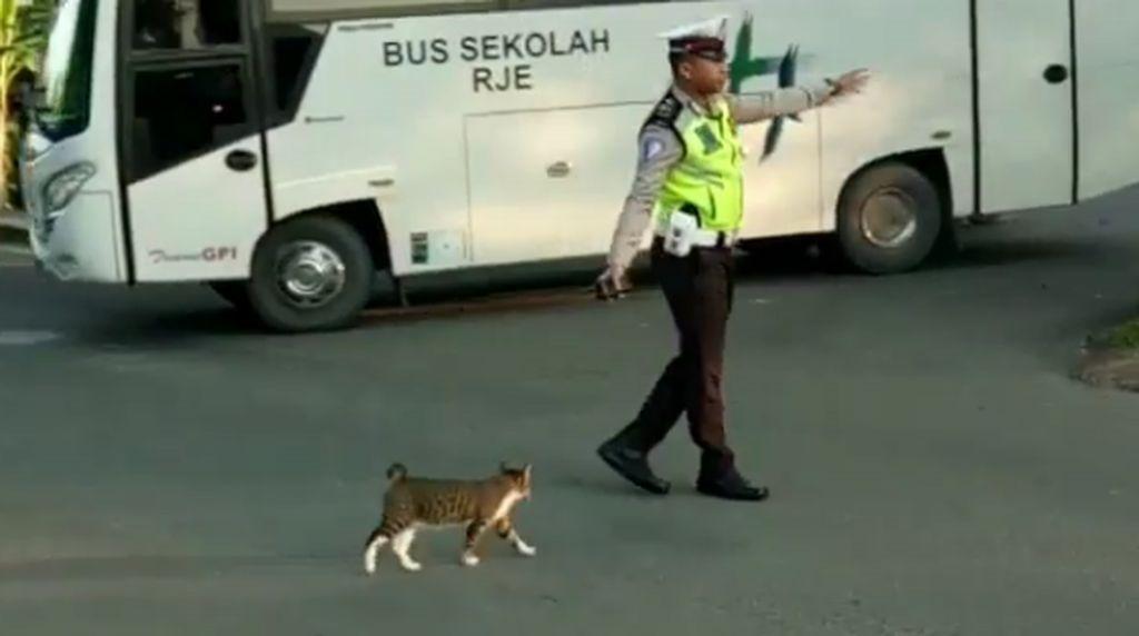 Viral! Ketika Polisi Bantu Kucing Menyeberang