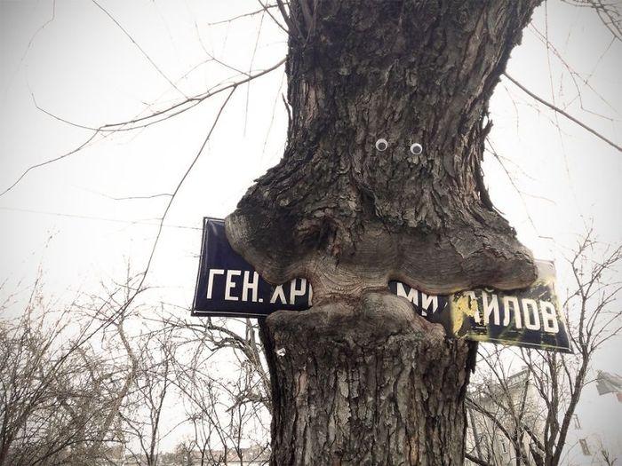 Pohon ini seolah melahap papan nama jalan yang berada di bawahnya. dok. eyebombing