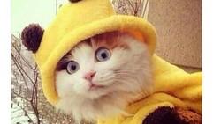 Gambar kucing lucu rupanya banyak manfaatnya. Ketika Belgia diancam teroris tahun 2015 lalu, warganet bereaksi dengan membagikan gambar kucing lucu.